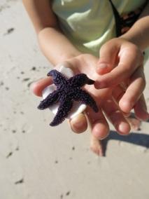 Une étoile de mer à sauver !