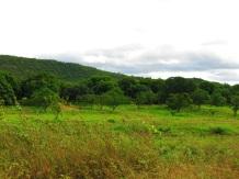 Prairie de manguiers