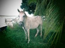 sous les yeux ébahis d'un cheval