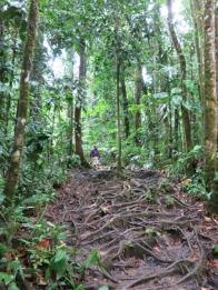 Pour aller aux cascades, il faut marcher longtemps dans la forêt tropicale...