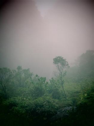 Chute dans la brume