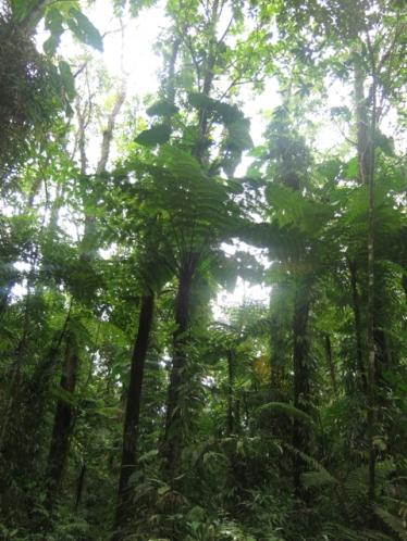 Majestueuse forêt