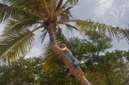 Et si je montais sur un cocotier !