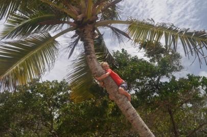 Arthur en haut du cocotier.