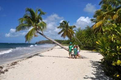 Palmiers, sable blanc… près de l'ilet Chevalier
